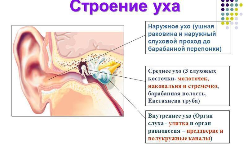 Массаж при экссудативном отите
