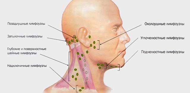 Воспаление лимфоузлов за ухом у ребенка лечение народными средствами