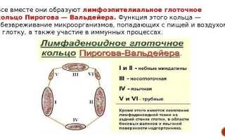 Лимфоэпителиальное кольцо Пирогова-Вальдейера