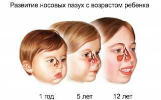 Особенности строения и функции дыхательной системы у детей