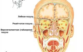 Верхнечелюстная пазуха: анатомия