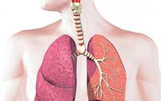 Анатомия и функции дыхательной системы